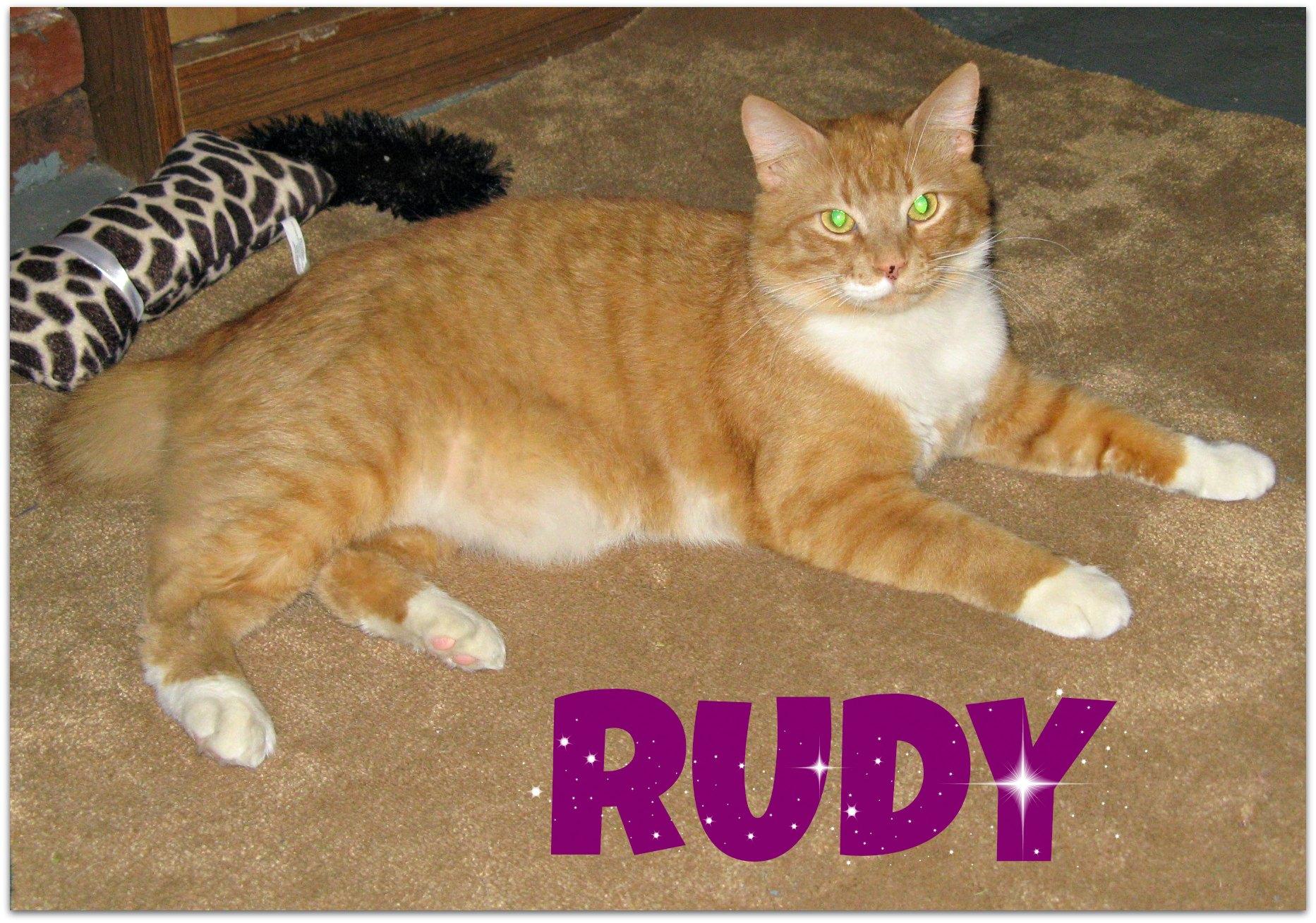 RUDY-lie
