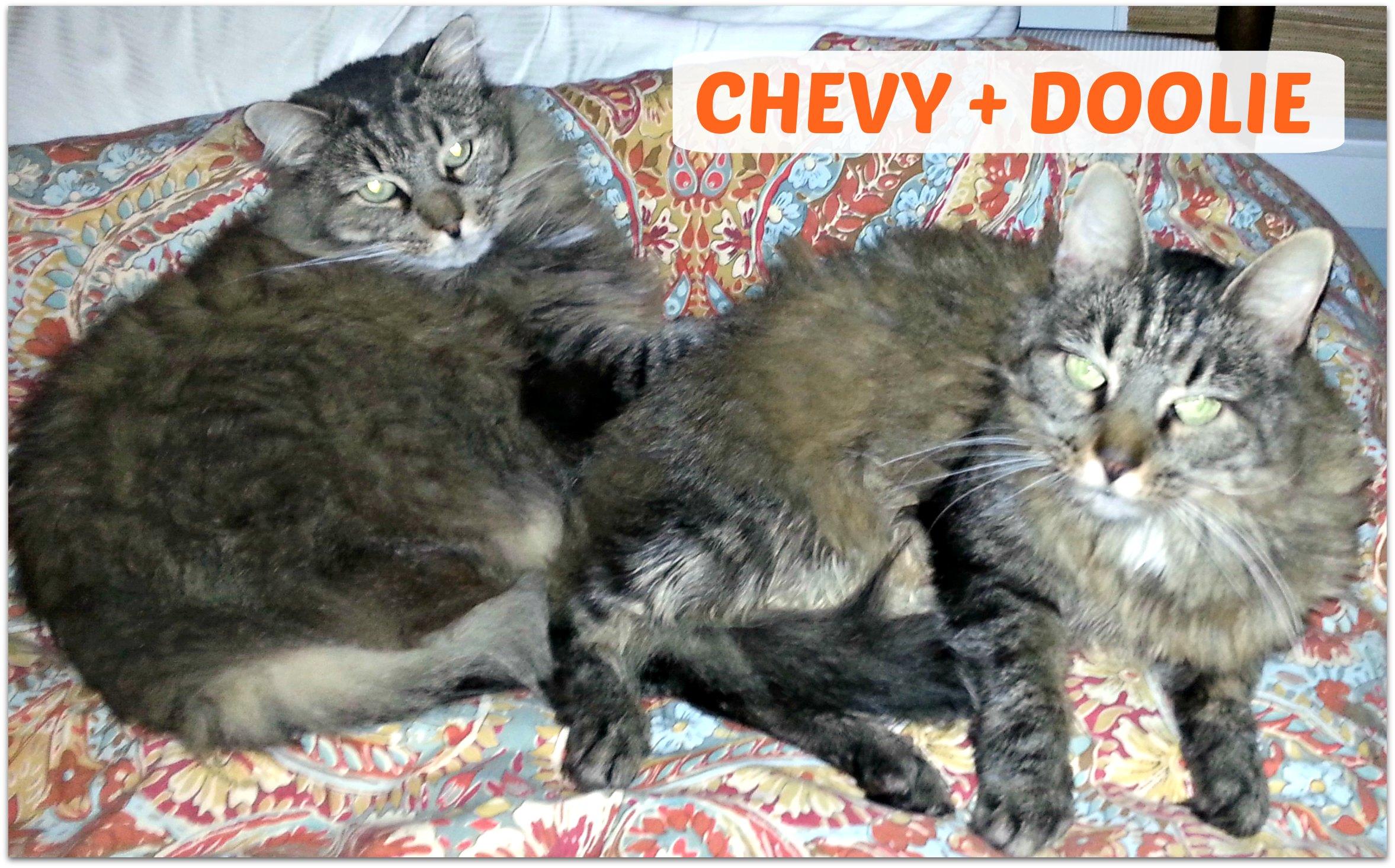 DOOLIE+CHEVY