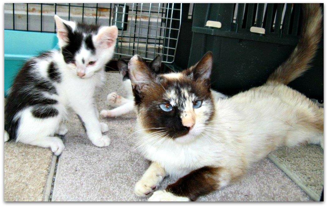 Charlotte-kittens