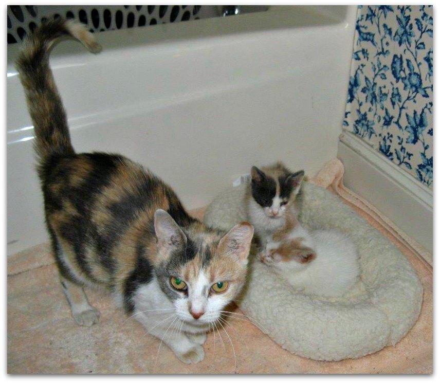 Posey-kittens