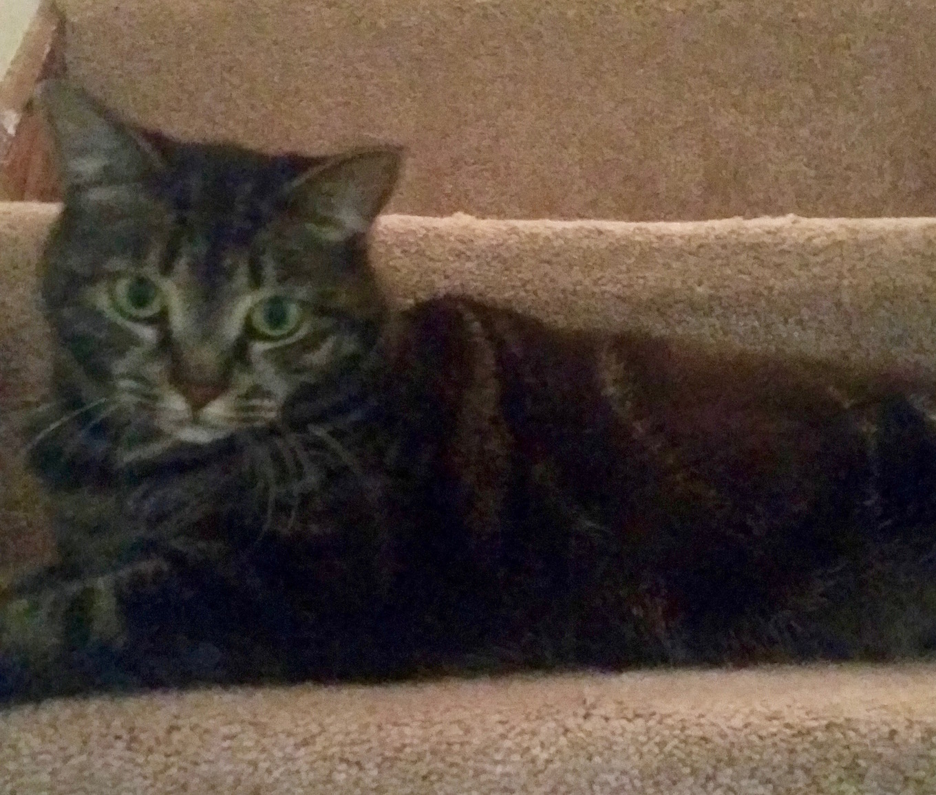 MITZY stair