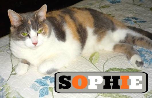 Sophie-mdd.jpg