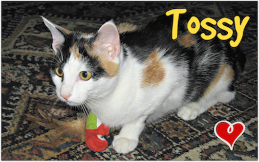 Tossy-L.jpg