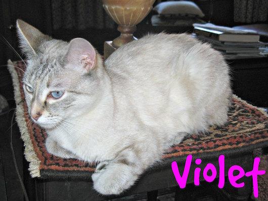 Violet-table.jpg