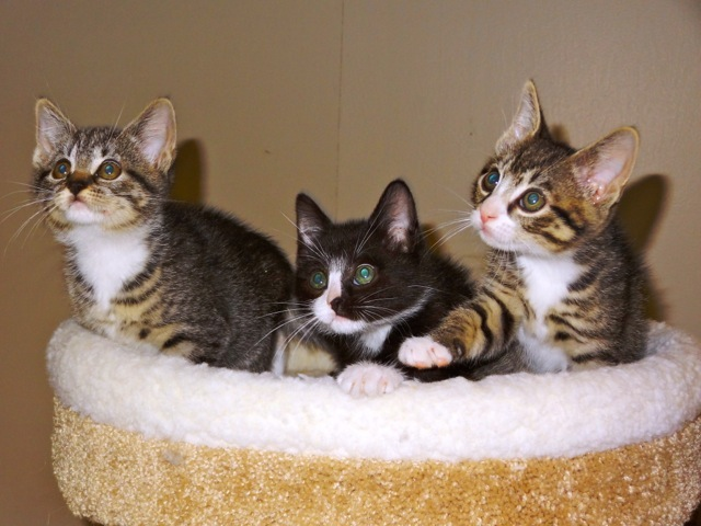 priscilla_kittens_3.jpg